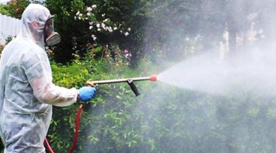 Eliminare gli scarafaggi con metodi e prodotti naturali